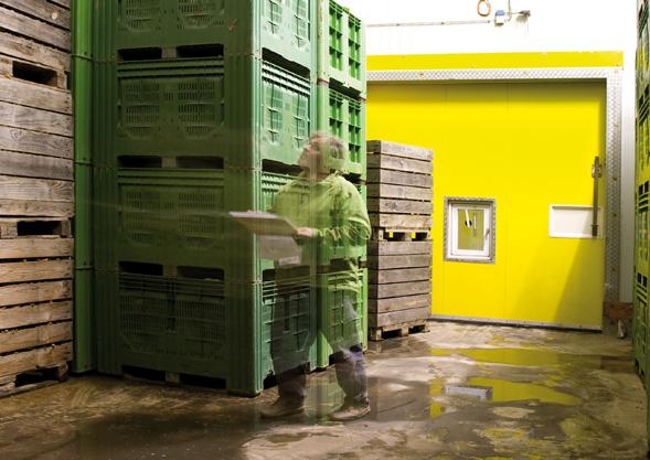 Bio Gemüse von Hoch-Reinhard   die Kiste