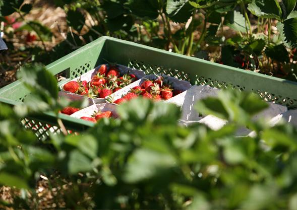 TIPP | ABHOL-Gemüse von Hoch-Reinhard bestellen