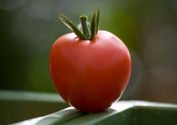 TIPP | ABHOL-Gemüse von Hoch-Reinhard online bestellen