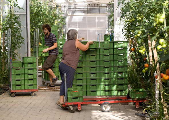 Bio Gemüse von Hoch-Reinhard | die Kiste