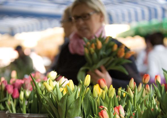 Tulpen von Hoch Reinhard Fischingen