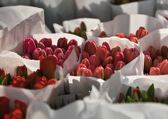 Tulpen von Hoch Reinhard Bioland Fischingen