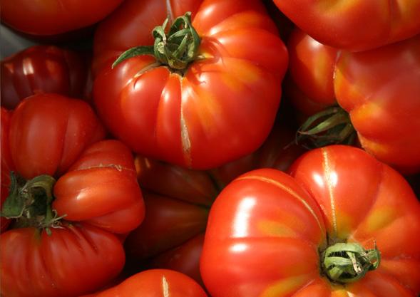 Tomaten von Hoch-Reinhard