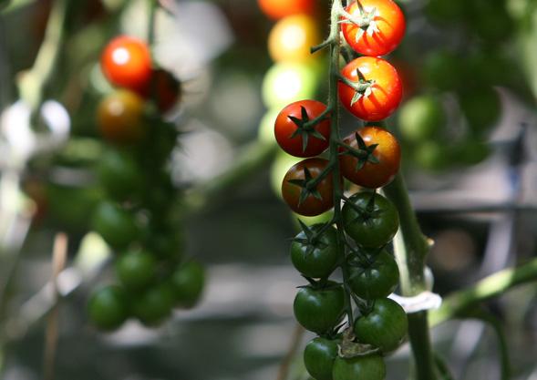 Gemüse von Hoch-Reinhard