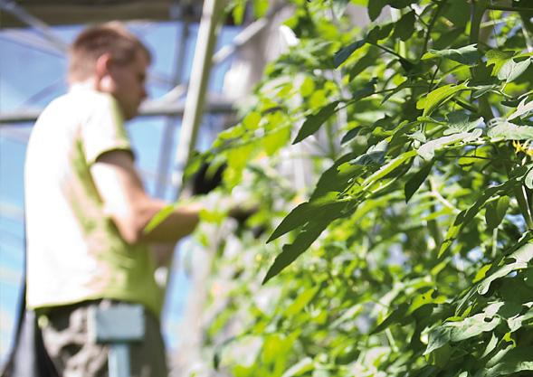 Die Liebe zur Pflanze