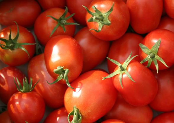 Tomaten aus Fischingen
