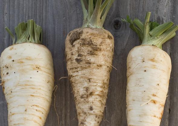 Bioland Gemüse von Hoch-Reinhard