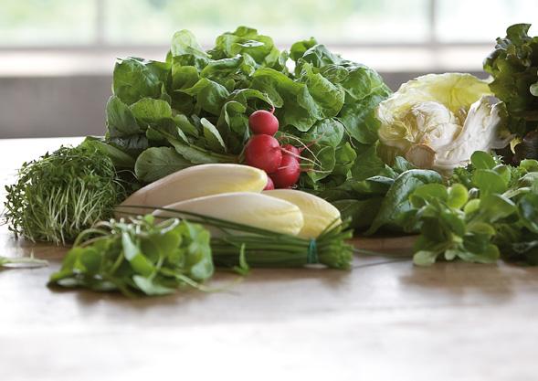 Bio Gemüse Hoch Reinhard