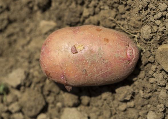 TIPP | Bio-Gemüse von Hoch-Reinhard