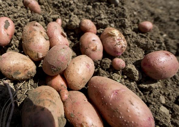 TIPP | Bioland Gemüse von Hoch-Reinhard