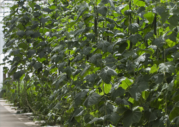 TIPP   Bio-Gemüse von Hoch-Reinhard