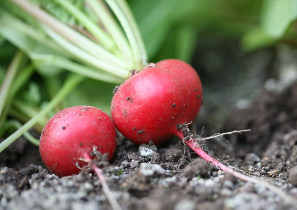 TIPP | ABHOL-Gemüse von Hoch-Reinhard