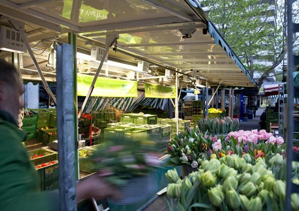 Tulpen von Bioland Gärtnerei Hoch Reinhard